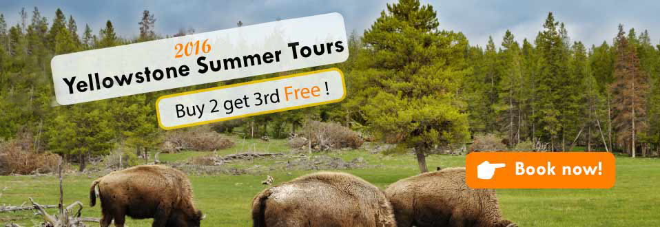 Yellowstone tours Discounts