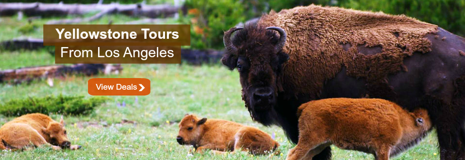 Yellowstone tours from Los Angeles